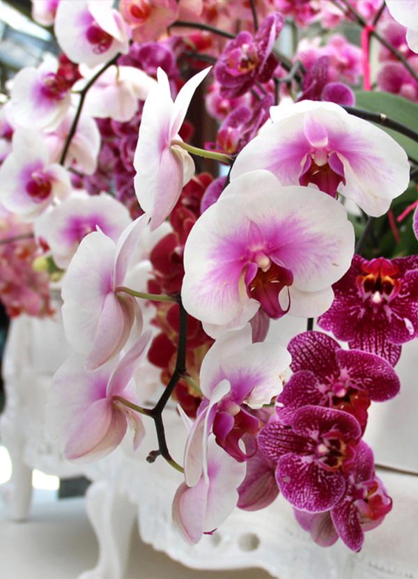 Le nostre orchidee